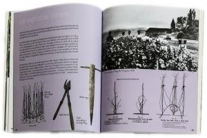De nombreuses pages contextuelles : ici le vignoble lorrain