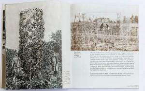 à gauche arbre en fuseau; à droite JJ Picoré dans son exploitation